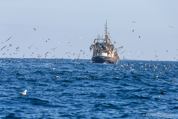 Trawler with 100's of birds in it's wake © Martin oosthuizen during a Cape Town Pelagics trip