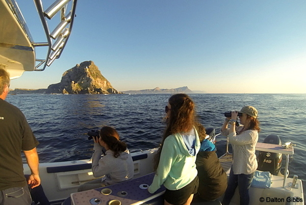 Leaving Cape Point behind as we head out for the trawling grounds on a Cape Town Pelagics trip ©Dalton Gibbs
